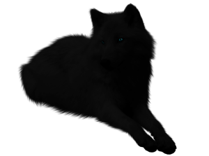 black_wolf_png_by_itsdura-d42332e