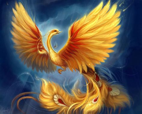 phoenix pasare