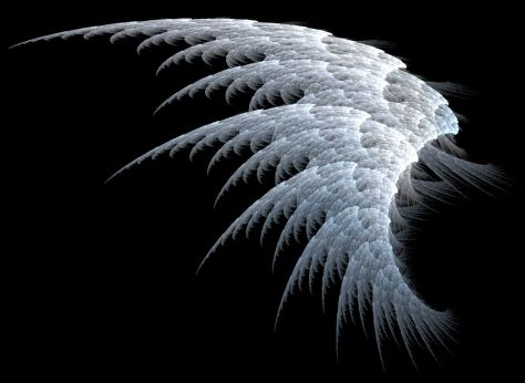 white_angel_wings_wallpaper-other